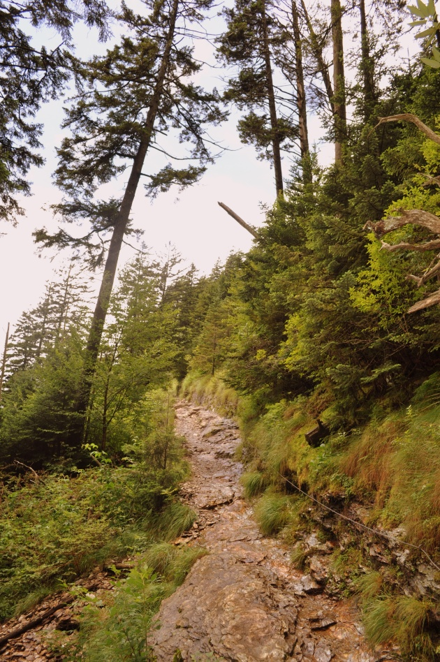 alum cave trail to mt leconte